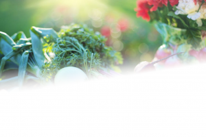 Nutritional Therapy Header